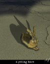 Cartoon: end of... (small) by Anjo tagged duerer hase hare end dead asphalt car auto street strasse