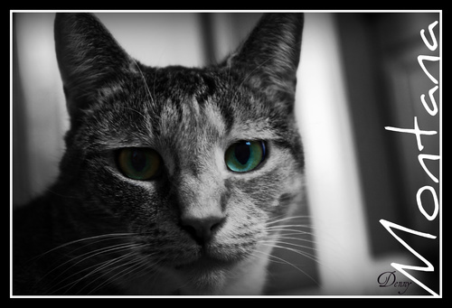 Cartoon: Montana Sky (medium) by Krinisty tagged cats,kitty,eyes,deep,solitude,hurt,pain,love,companion,pet,furry,wonderful,krinisty,photography,happiness