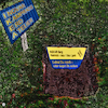 Cartoon: Gut Holz (small) by Night Owl tagged ikea,ingvar,kamprad,sarg,grab