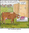 Cartoon: Fate (small) by noodles tagged cows,slaughter,beef,hinduism,sacred,optimist