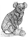 Cartoon: koala (small) by Battlestar tagged koala,tiere,animals
