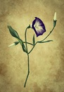 Cartoon: Flower (small) by alesza tagged flower,winde,nature,blume