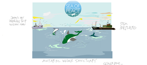 Cartoon: Whaling sans Frontier (medium) by gungor tagged greenpeace