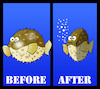 Cartoon: Puffer Fish Diet... (small) by berk-olgun tagged puffer,fish,diet