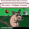 Cartoon: Ein Neuer Erdogan Freund (small) by cartoonharry tagged freund,ratte,rattusdetentus,erdogan,neuguinea