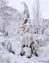 Cartoon: A real snowman (small) by Kestutis tagged real,snowman,observagraphics,winter,tree,kestutis,lithuania,snow