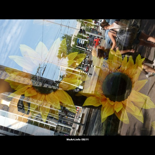 Cartoon: MoArt - Glass Reflections 5 (medium) by MoArt Rotterdam tagged straat,street,people,mensen,sunflower,zonnebloem,window,etalage,weerspiegeling,reflectie,reflection,moartcards,moart,rotterdam,tags