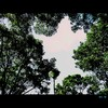 Cartoon: MH - Looking Up (small) by MoArt Rotterdam tagged looking,up,lookingup,omhoogkijken,trees,air,bomen,lucht