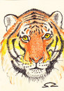 Cartoon: tiger (small) by zed tagged tiger,global,warming