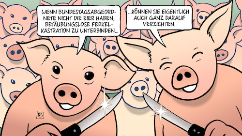 Cartoon: Bundestag und Ferkel (medium) by Harm Bengen tagged bundestagsabgeordnete,eier,hoden,betäubungslose,ferkelkastration,landwirtschaft,schweinezucht,fleisch,tierquälerei,harm,bengen,cartoon,karikatur,bundestagsabgeordnete,eier,hoden,betäubungslose,ferkelkastration,landwirtschaft,schweinezucht,fleisch,tierquälerei,harm,bengen,cartoon,karikatur