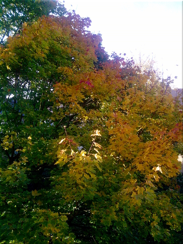 Cartoon: Herbst (medium) by lesemaus tagged herbst