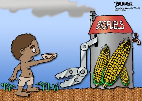 Cartoon: Biofuels (medium) by dbaldinger tagged food,corn,poverty,starvation,