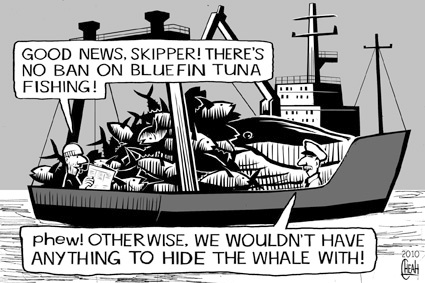Cartoon: Tuna fishing ban (medium) by sinann tagged bluefin,tuna,ban,whale
