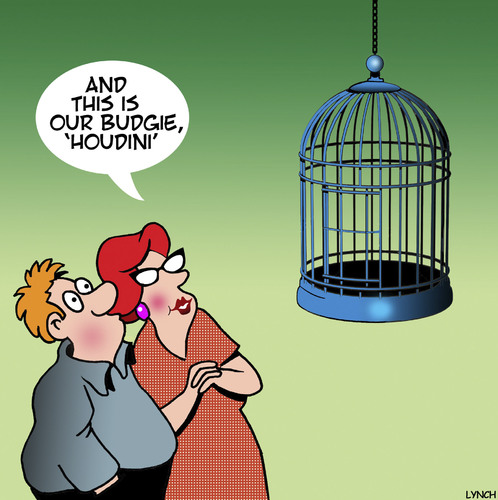Cartoon: Houdini (medium) by toons tagged budgie,houdini,escape,artist,birds,pets,birdcage,budgie,houdini,escape,artist,birds,pets,birdcage