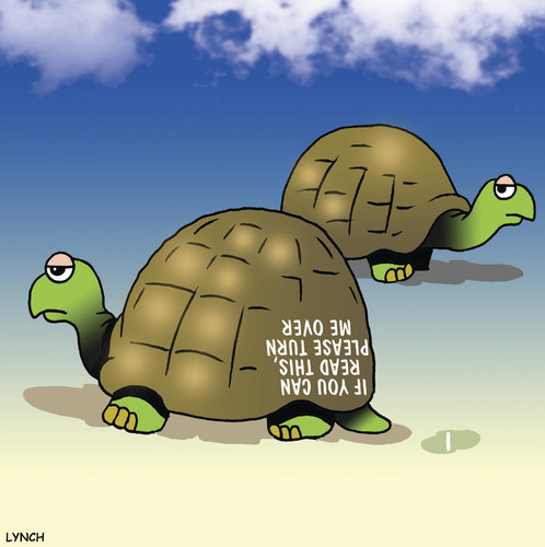 Cartoon: Turn me over (medium) by toons tagged tortoise,turtle