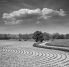 Cartoon: Symphony (small) by BenHeine tagged lessive,rochefort,belgium,ben,heine,photography,art,cloud,natire,landscape,artistery,samsung,nx10,composition,tree,symphony,music,elements,curves,courbes