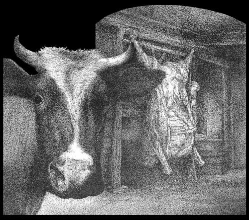 Cartoon: The ox (medium) by willemrasingart tagged rembrandt,