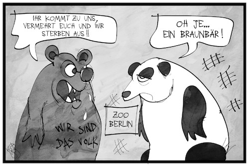 Cartoon: Von Panda- und Braunbären (medium) by Kostas Koufogiorgos tagged karikatur,koufogiorgos,illustration,cartoon,panda,zoo,berlin,braunbär,ausländerfreindlichkeit,rassismus,tier,karikatur,koufogiorgos,illustration,cartoon,panda,zoo,berlin,braunbär,ausländerfreindlichkeit,rassismus,tier