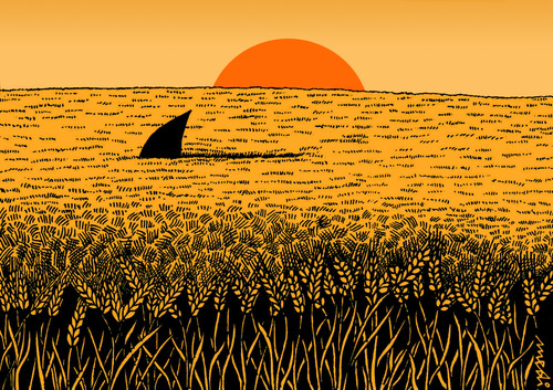 Cartoon: a sea of wheat (medium) by Medi Belortaja tagged humor,paradox,danger,shark,wheat,sunshine,field,sea
