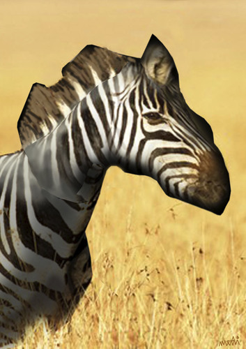 Cartoon: zebra (medium) by Medi Belortaja tagged map,animals,zebra,africa,environment