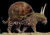 Cartoon: fast snail (small) by Medi Belortaja tagged fast,slowely,snail,shell,leopard,genetical,modification