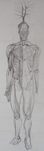 Cartoon: anatomy study whit tree (medium) by gianlucasanvido tagged man,anatomy,tree,